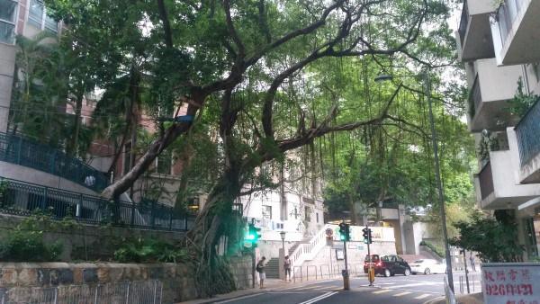20150827 TREES